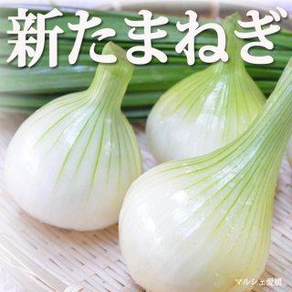 新たまねぎ 玉葱 5kg サイズ混合 愛媛県産 ご家庭用 一部地域送料無料