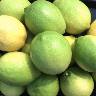 レモン 2kg 国産 ハウスレモン ノーワックス 塩レモンにおすすめ いわぎ島 一部地域送料無料