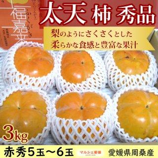 太天柿 秀品 3kg 愛媛県周桑産 5玉から7玉 たいてん 福嘉来 ふくがき 一部地域送料無料
