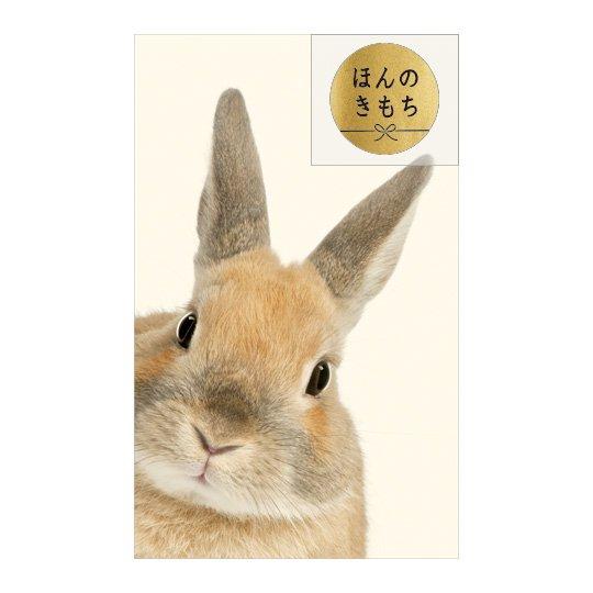 ポチ袋S ひょっこりウサギ