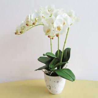 光触媒アートフラワーアレンジメント【ミディ胡蝶蘭3本立て・ホワイト】少しコンパクトなサイズの胡蝶蘭です。