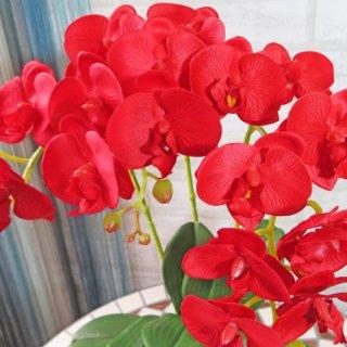光触媒アートフラワーアレンジメント【ミディ胡蝶蘭3本立て・レッド】少しコンパクトなサイズの胡蝶蘭です。還暦のお祝いに。