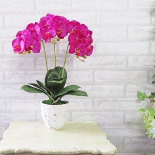 光触媒アートフラワーアレンジメント【ミディ胡蝶蘭3本立て・オーキッド】少しコンパクトなサイズの胡蝶蘭です。