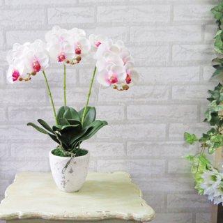 光触媒アートフラワーアレンジメント【ミディ胡蝶蘭3本立て・ホワイトオーキッド】少しコンパクトなサイズの胡蝶蘭です。
