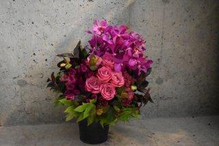 celebration flower S