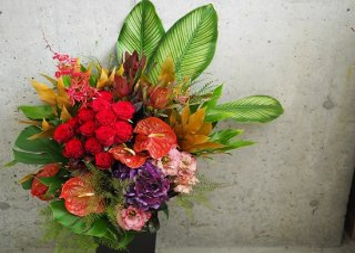 celebration flower L