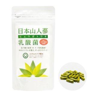 ヒュウガトウキ乳酸菌サプリメント(90粒)