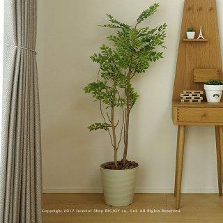 観葉植物 ゴールデンリーフ125 GREENESS