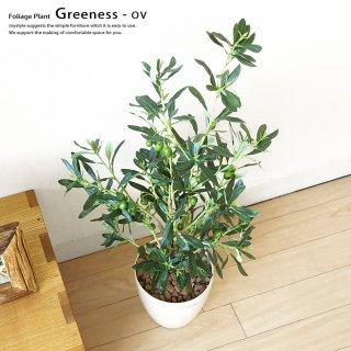 観葉植物 オリーブ GREENESS