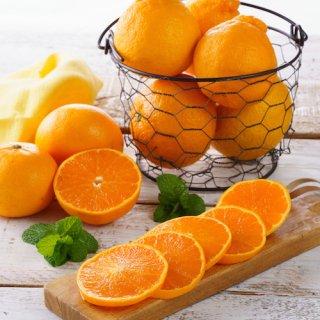 柑橘2種(せとか&デコポン)+レモンセット