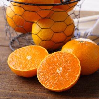 【訳アリ|無化学農薬】柑橘2種(せとか&デコポン)+レモンセット