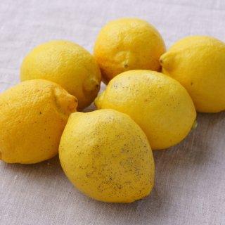 【訳アリ】「青いレモンの島」のレモン 1kg