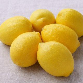 「青いレモンの島」のこだわり栽培レモン 1kg