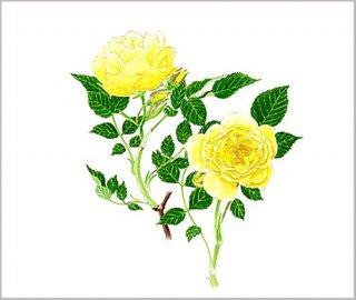 版画 「二輪の黄色いバラ」