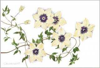 版画 「鉄線の花」