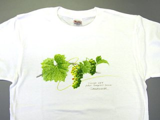 Tシャツ(日の当たるシャルドネ)