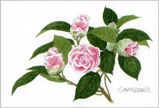 ポストカード「ピンクと白のツバキ」