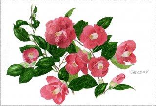 ポストカード「赤い花椿」