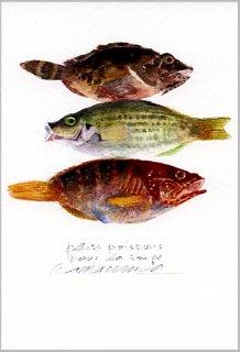 ポストカード「スープ用の小魚」