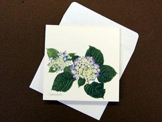 グリーティングミニカード(アジサイの花)