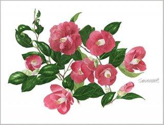 版画 「赤い花椿」