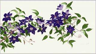 版画 「紫のクレマチス 2007」