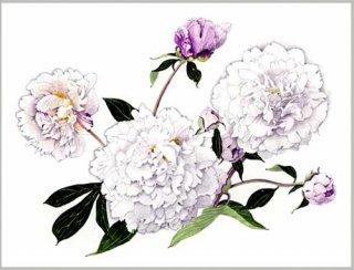 版画 「芍薬の花」