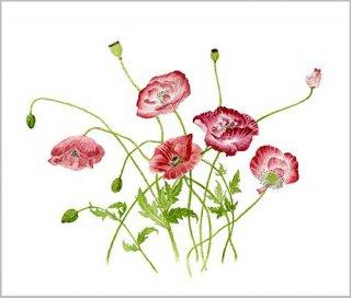 版画 「ヒナゲシの花」