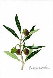 ポストカード「オリーブの小枝」