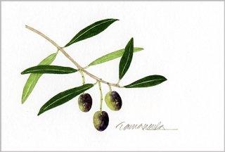 ポストカード「オリーブの小枝2」