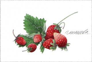 ポストカード「イチゴ -今朝の収穫」