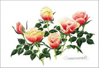ポストカード「ピンク&グリーンローズ」