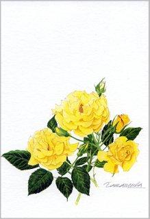ポストカード「黄色いバラ」