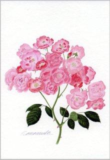 ポストカード「一枝のバラの花房」
