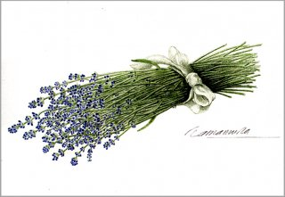 ポストカード「ラベンダーの花束」