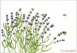 ポストカード「ラベンダーと5匹の蜜蜂」