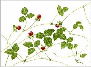 版画 「つる草イチゴ」