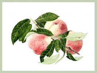 版画 「収穫された三つの桃」