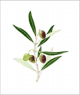 版画 「オリーブの小枝」