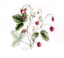 版画 「森のイチゴ」