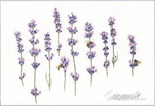 ポストカード「ラベンダーと三匹の蜜蜂」