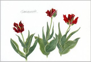 ポストカード「赤と緑のチューリップ」