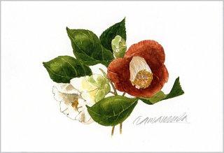 ポストカード「赤と白の椿の花」