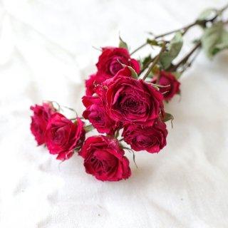 【花材】バラ・ローラ