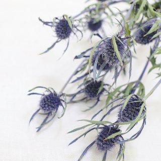 【花材】エリンジウム・ブルーダイナマイト
