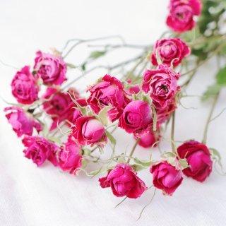 【花材】バラ・プリシラ
