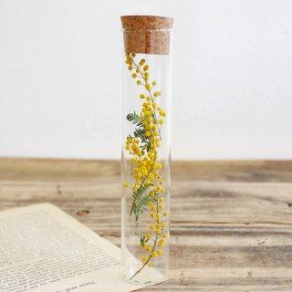 植物標本コルク瓶(ミモザ)