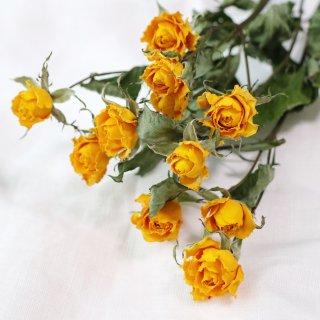 【花材】バラ・サニーシンディ