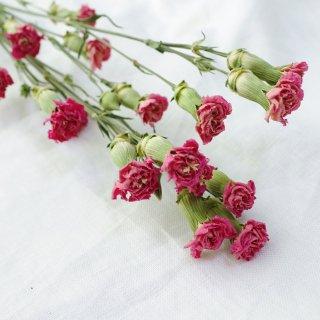 【花材】スプレーカーネーション・ピンクピジョン
