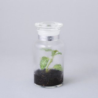 "BOTTLE by BOTANIST 500ml ""FITTONIA. A.G"""